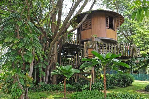 Simple Tree House Designs